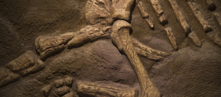 Make a Dinosaur Fossil Dig