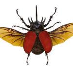 Make a Beetle Habitat