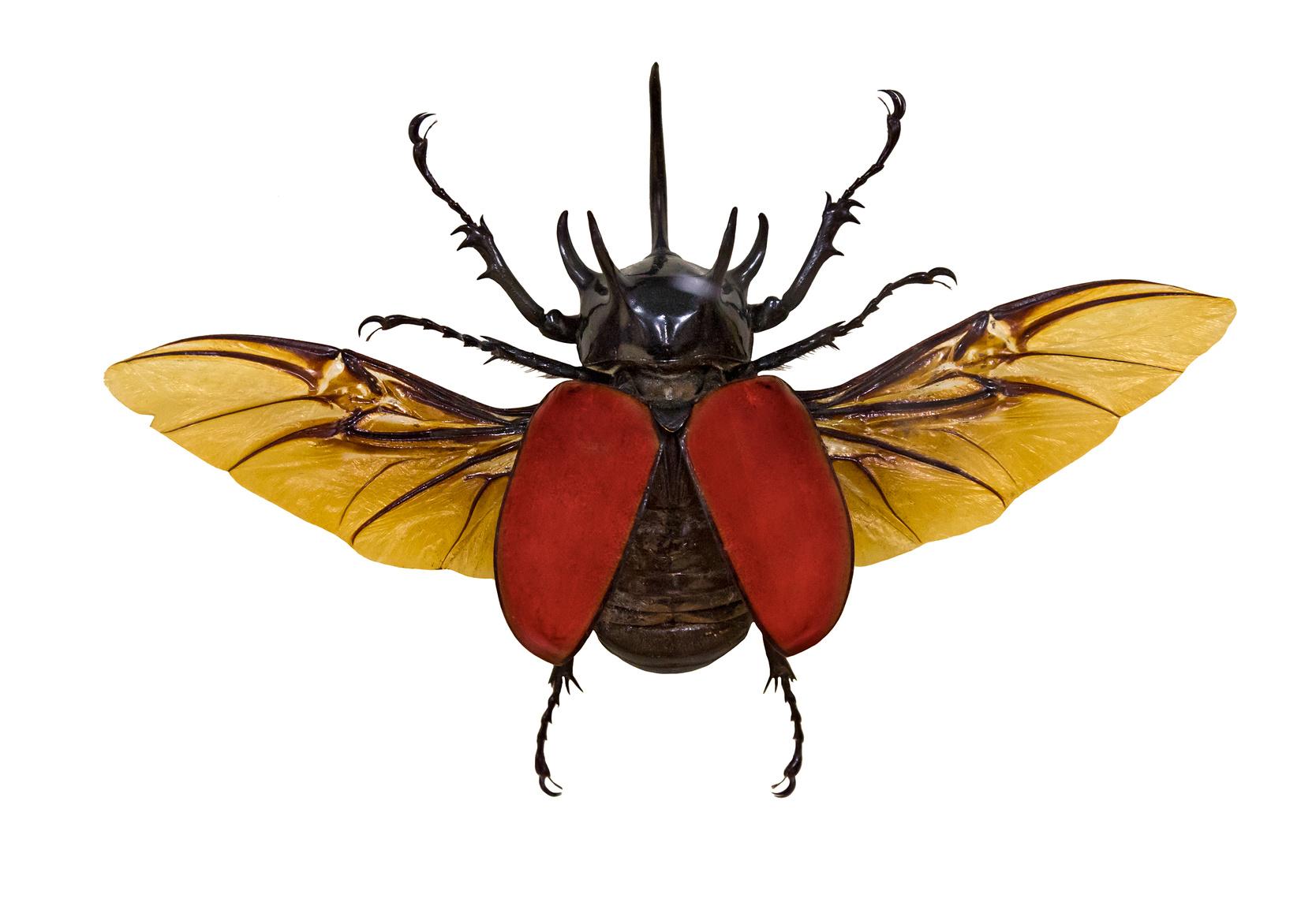 make a beetle habitat experiment exchange