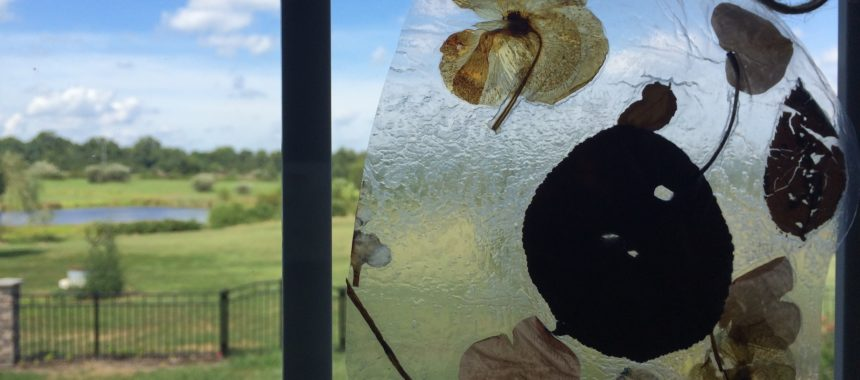 Learn the Parts of a Leaf & Make Window Art
