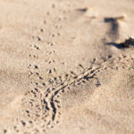 Make Reptile & Amphibian Tracks