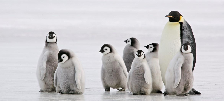 Walk Like a Penguin! – Experiment Exchange