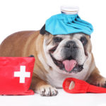 Learn Basic Animal First Aid