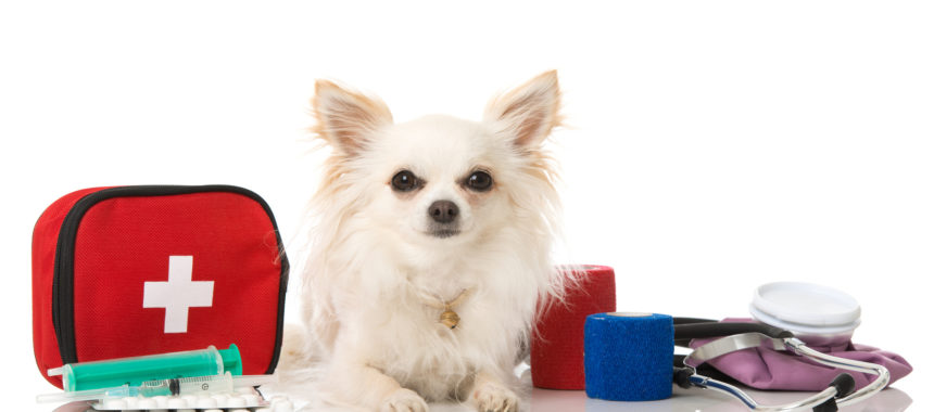 Make Your Own Pet First Aid Kit